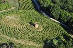 188661 vigne della fattoria di villa saletta